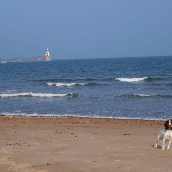 Blyth beach, Northumberland