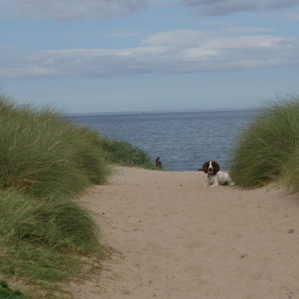 karens kottages - self catering dog friendly holiday cottages in Northumberland - warkworth