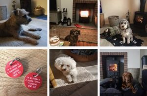 self catering holiday cottages in Northumberland - karen's kottages - stanegate cottage - drakestone cottage - northumberland - dog friendly