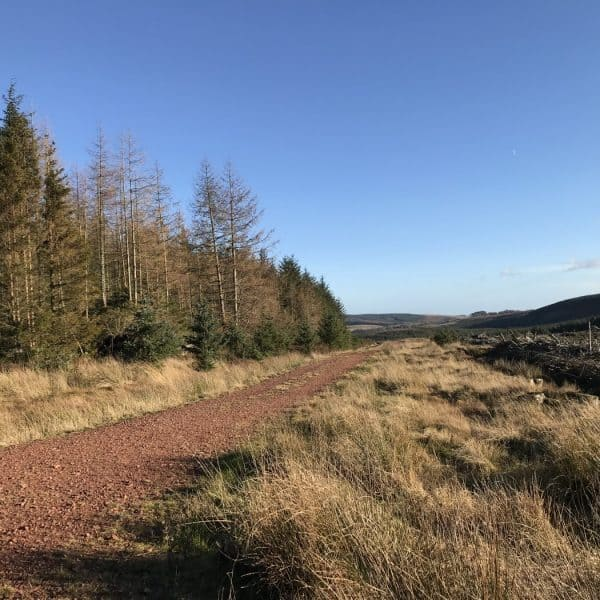karens kottages - thrunton woods - out and about in northumberland - cottage - dog friendly - walk - bike - cycle